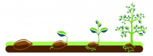 seed_tree_SFTE_v01-01